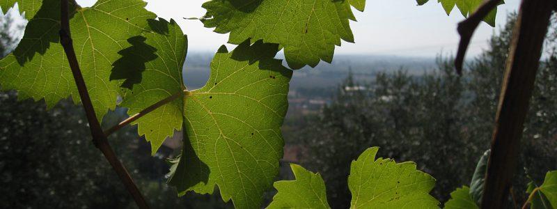 Το πρώτο virtual wine trip στην Ιερισσό, για την παρουσίαση του «ακάνθιου» οίνου!